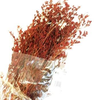 craftstore_plants_red_wheat2